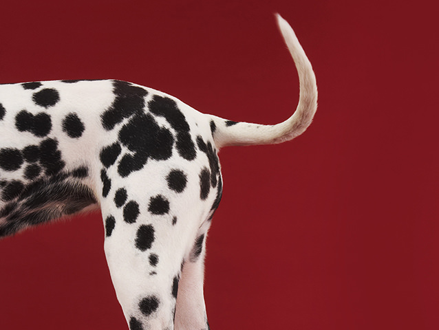 Tail wagging the dog: how systems can drive business