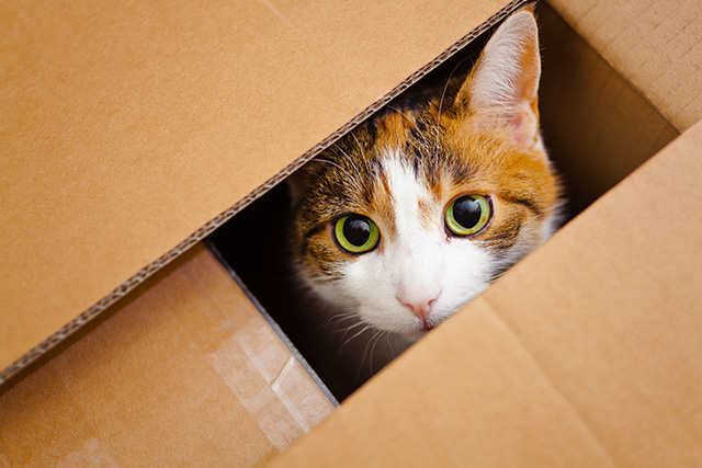 Cat in box structure can drive innovation and growth